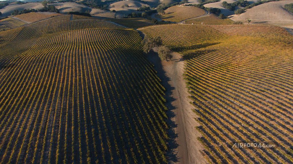Paso Vineyard 2