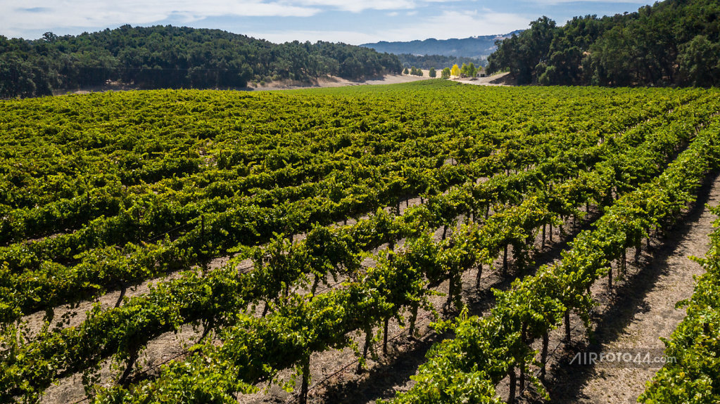 Wine-46-1808001.jpg