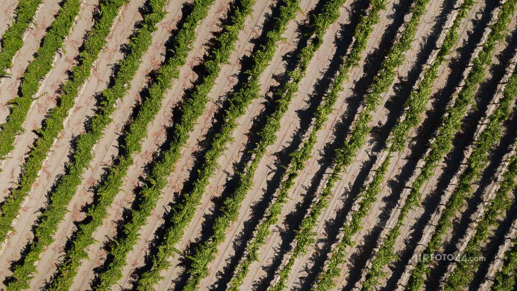 Wine-46-1808010.jpg