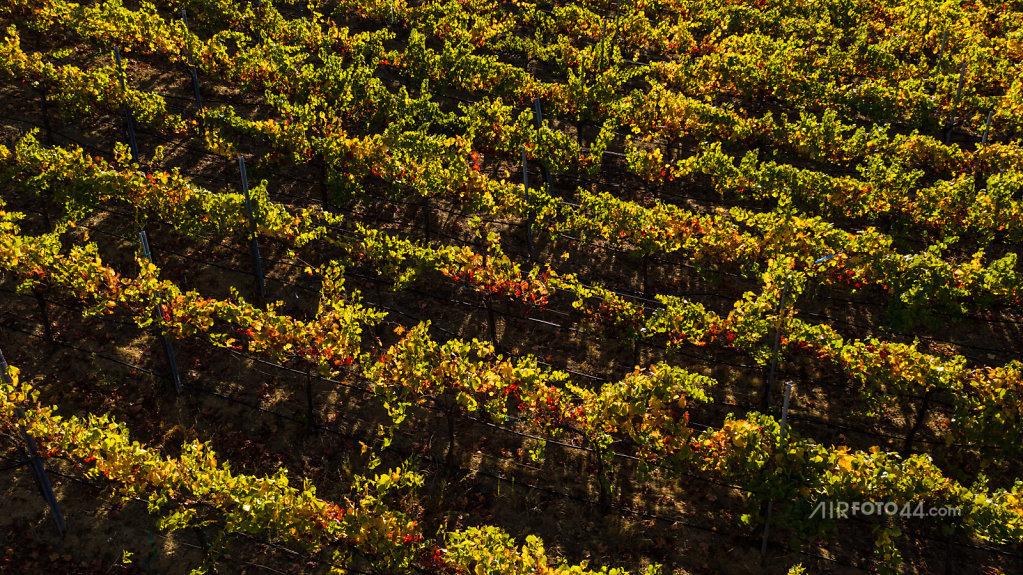wine-oaks-1809009.jpg